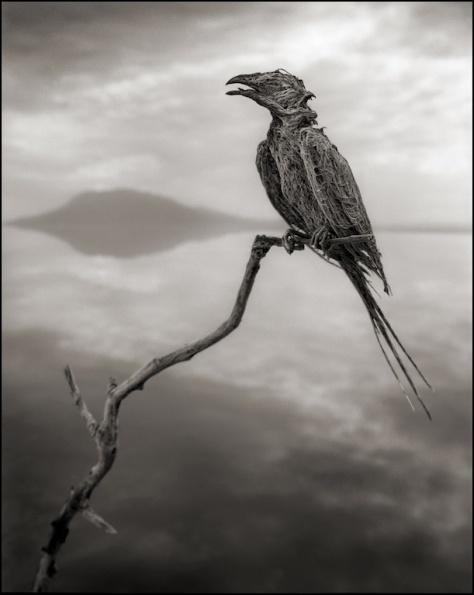 Calcified-Songbird