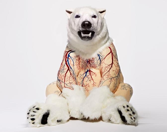 deborah-simon-bears-designboom-13
